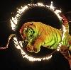 Цирки в Каминском